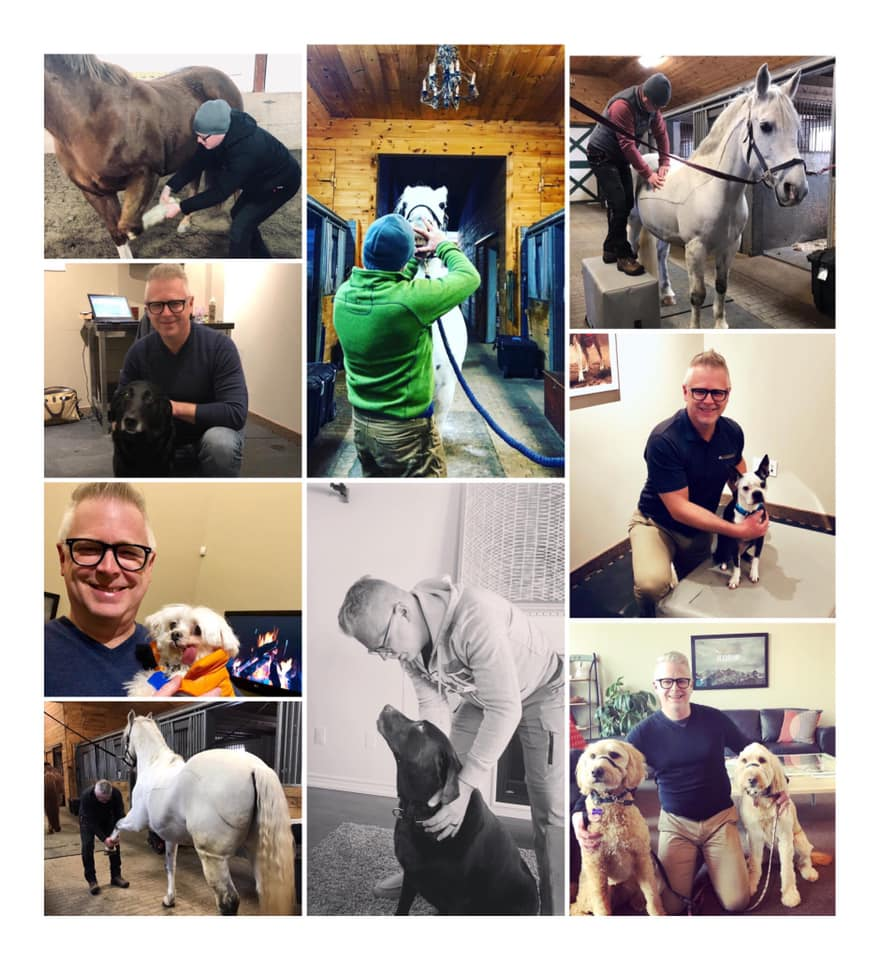 DR BRENT THOMPSON EQUINE CHIROPRACTOR